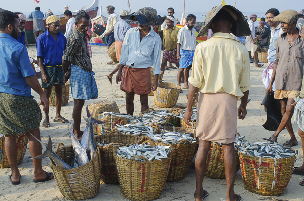 Kerela's fisheries: Times, they are a changing - Documentary Storytellers