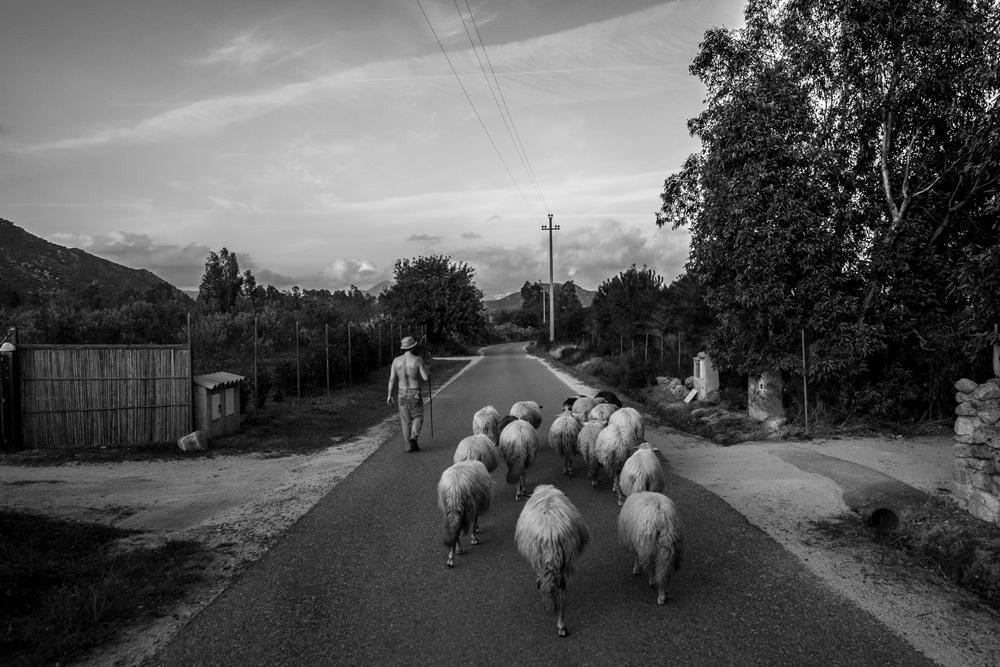 Shepherd 2.0 - Documentary Storytellers