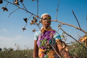 Beyond the Cotton Fields - Documentary Storytellers