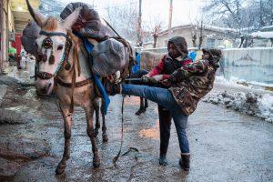 Tawela, Kurdistan, Irak, mars 2019. Le sanglage est important. Une marchandise mal arrimée peut entra^iner le conducteur de mules dans sa chute. Et si elle est endommagée, c'est lui qui devra la rembourser.